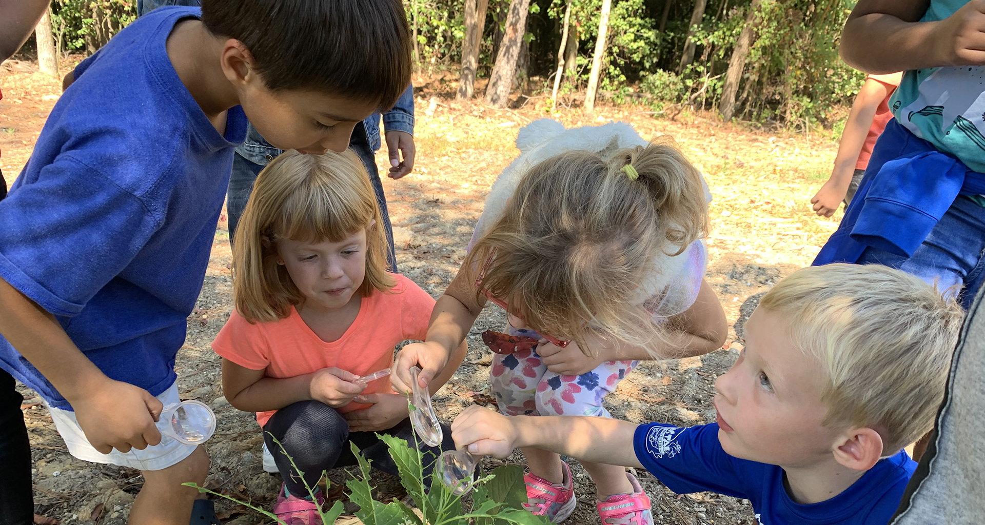 Students outside examining a plant with magnifying glasses.