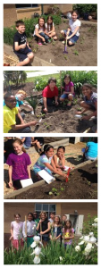 Four pictures of students digging and planting in the garden.